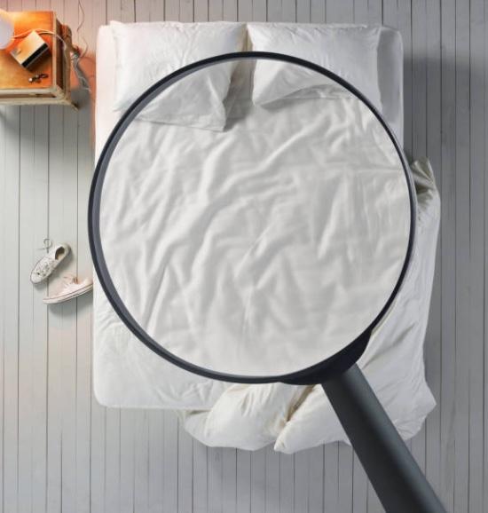 pest control bedbug